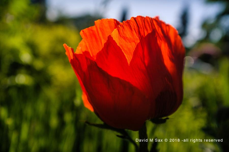 5.28.17 - Orange Glow...