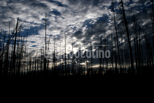 The silhouette of a burnt forest is seen in  Yellowstone NP, Wayoming, USA on July 29, 2005 ..Born in Argentina, photographer Ivan Pisarenko in 2005  decided to ride his motorcycle across the American continent. While traveling Ivan is gathering an exceptional photographic document on the more diverse corners of the region. Archivolatino will publish several stories by this talented young photographer..Closer look at  Ivan's page www.americaendosruedas.com.....