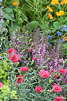 Dianthus, penstemon, brunnera, calendula, lady's mantle in a mixture of colorful spring blooms that are attractive to wildlife, especially butterflies