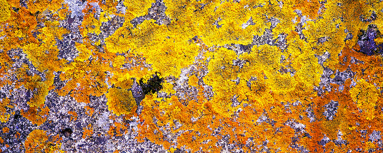 Yellow and orange mos. Images taken with Hasselblad Xpan camera and Fuji Velvia film.