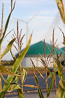 GERMANY Biogas plant and maize field / DEUTSCHLAND Schleswig Holstein Bredstedt, Windrad, Envitec Biogasanlage und Maisfeld