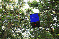 """Set four meters above the ground between trees, a hive floats in the air for this """"sky farmer."""""""