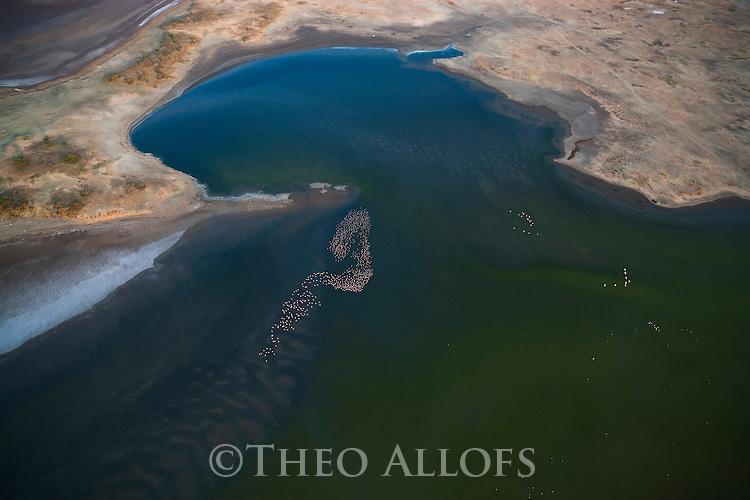 Kenya, Rift Valley,  lesser flamingos at Lake Magadi