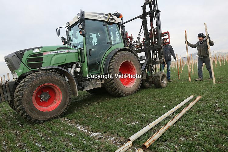 Foto: VidiPhoto<br /> <br /> BEMMEL - Met de nodige inspanning worden woensdag zo'n 25.000 stalen pijpen de bevroren grond in geboord. Op deze plek in het kassegebied Bergerden in Bemmel, bij Arnhem, verrijst een van de grootste overkapte aardbeien-arealen van ons land. Teler Jan van Genderen (Royal Berry), die al zo'n 11,5 ha. aan aardbeien onder glas in productie heeft, breidt zijn bedrijf uit met 7,5 ha. op stellingen. Daarmee wordt hij de grootste aardbeienteler van Gelderland. De komende weken worden de stellingen geplaatst en in maart worden de eerste aardbeienplantjes geplant. In juni worden dan de eerste aardbeien, zogenoemde doordragers, van deze buitenteelt geoogst. Van Genderen wil met de aardbeien onder de kap de kwaliteit van zijn product verbeteren. Tijdens de warme maanden zijn aardbeien van onder de kap langer houdbaar en smakelijker dan aardbeien uit de kas of van de koude grond. Bovendien zijn er minder bestrijdingsmiddelen nodig dan bij de op de grond geteelde vruchten. Vandaar dat ook steeds meer grote telers uit Brabant overstappen op stellingaardbeien.