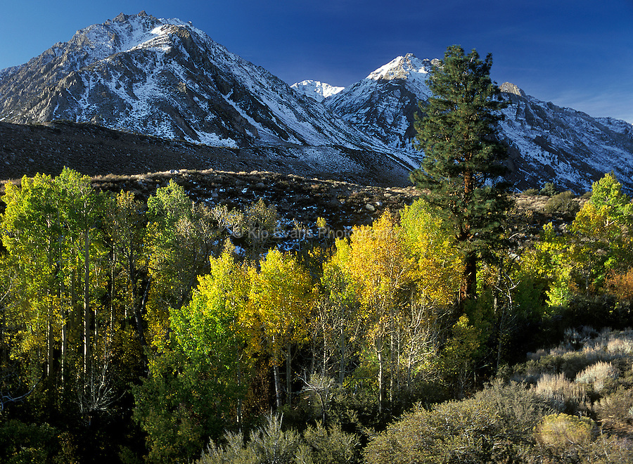 McGee Canyon in early fall. Eastern Sierra Nevada