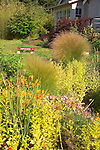 Looking through a mixed bed of ornamental grasses, shrubs, and flowering perennials including orange California Poppies, at a red wagon sitting in front of the bungalow-style farmhouse just beyond on Vashon Island in Washington State's Puget Sound. Garden design by Stenn Design