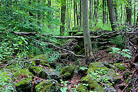 Moss covered rocks on the Bruce Trail in Ontario