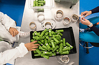 "Workers apply safety labels to dram bottles containing high-dose ""g-cap"" gel capsules at the production and packaging facility for Garden Remedies, a medical cannabis producer, in Fitchburg, Massachusetts, USA, on Fri., Feb. 22, 2019. The bottles have a variety of safety labels, including stickers that read ""Not safe for children"" and ""Contains THC"" in addition to other safety features."