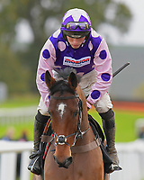 Winner of The John And Jean Taylor's Diamond Anniversary Handicap Hurdle Dan McGrue ridden by Harry Cobden and trained by Paul Nicholls during Horse Racing at Plumpton Racecourse on 4th November 2019