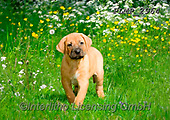 Marek, ANIMALS, REALISTISCHE TIERE, ANIMALES REALISTICOS, dogs, photos+++++,PLMP2964,#a#, EVERYDAY