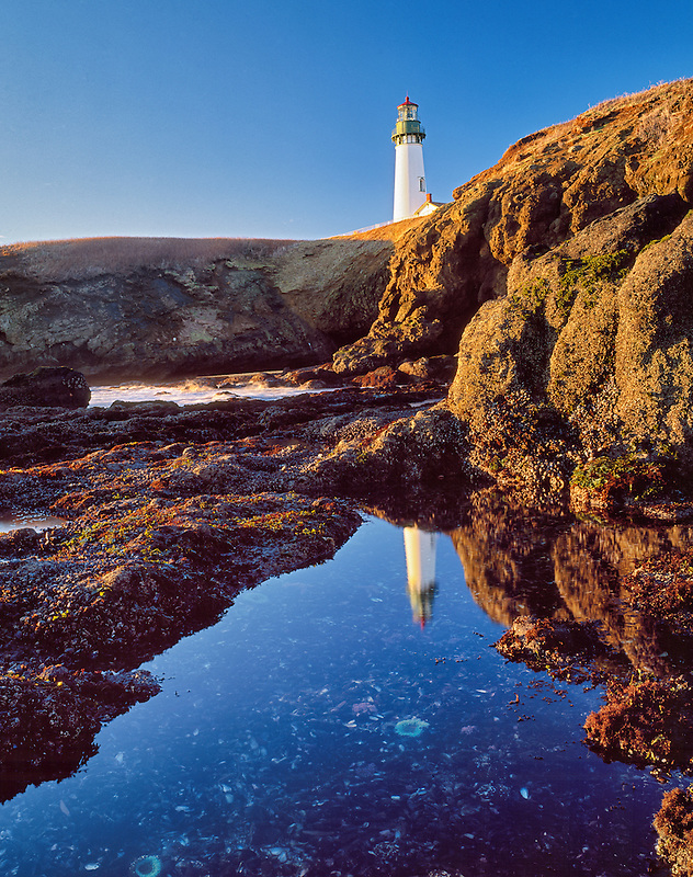 Yaquina Lighthouse reflected in tidepool. Oregon
