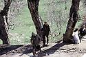 Turquie 1991.Les réfugiés kurdes sur la frontière: soldat repoussant  un homme.Turkey 19991.Kurdish refugees on the border, a soldier  with a stick  running after a refugee