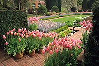 Tulip containers in formal garden, Filoli Gardens, Woodside, California