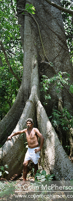 A man standing by a giant tree in the Amazon rainforest on the banks of the Tapajos river. The area surrounding the river was the front line in the battle between local communities and environmentalists who tried to prevent to spread of rainforest destruction by illegal loggers and companies which bought and seized land for use in cattle ranching and growing soy beans for export from Brazil via the port at Santarem.