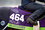November 1, 2018: Mustashry (GB), trained by Sir Michael R. Stoute, exercises in preparation for the Breeders' Cup Mile at Churchill Downs on November 1, 2018 in Louisville, Kentucky. Alex Evers/Eclipse Sportswire/CSM