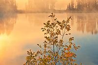 Morning fog on Isabel Lake<br />Kenora<br />Ontario<br />Canada