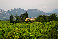 vineyard les dentelles de montmirail le cellier des princes chateauneuf du pape rhone france