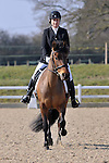 17/03/2016 - Class 2 - Unaffiliated Dressage - Brook Farm Training Centre