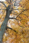 Autumn trees, leaves, flowers and plants in northern New Jersey, USA