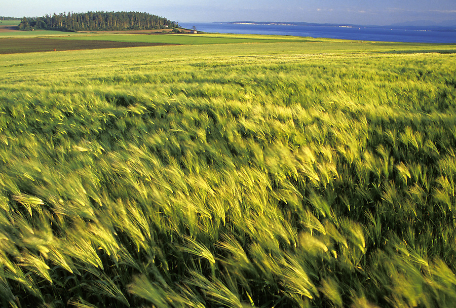 Ebey's Prairie, Ebey's Landing National Historic Reserve, Coupeville, Whidbey Island, Washington