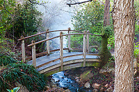 Bridge over creek leading to pond in Quarryhill Botanical Garden Glen Ellen, California