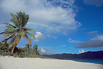 British Virgin Islands, Sandy Cay, Uninhabited island, palm tree and rainbow, Caribbean Sea, Central America..