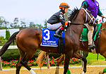 """OCTOBER 6, 2018 : Achilles Warrior in post parade of the """"Win & You're In"""" Champagne Stakes on Champagne Stakes Day at Belmont Park on October 6, 2018 in Elmont, NY.  Sue Kawczynski/ESW/CSM"""