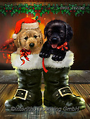 GIORDANO, CHRISTMAS ANIMALS, WEIHNACHTEN TIERE, NAVIDAD ANIMALES, paintings+++++,USGI2821M2,#xa#
