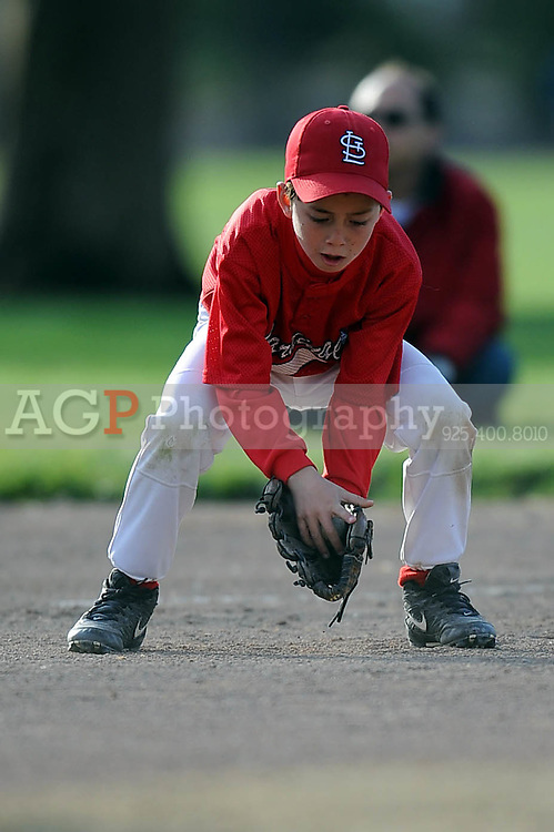 The AA Cardinals of Pleasanton National Little League  March 21, 2009.