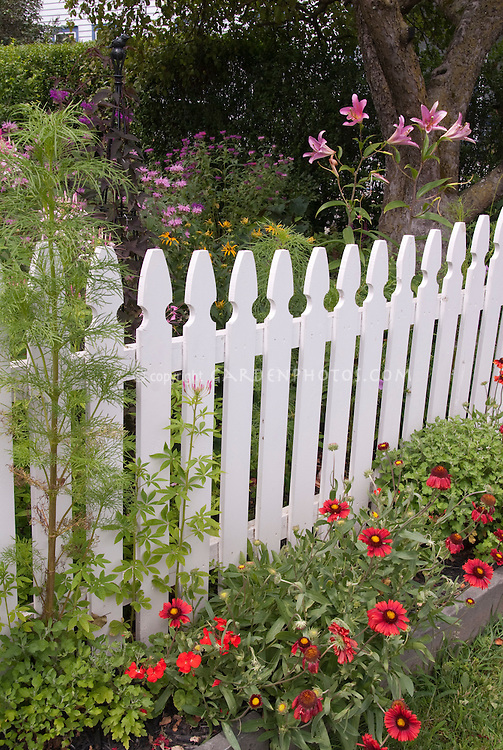 Looking over the white picket fence into summer flowering garden in pink and red, with tree, perennials, annuals plants