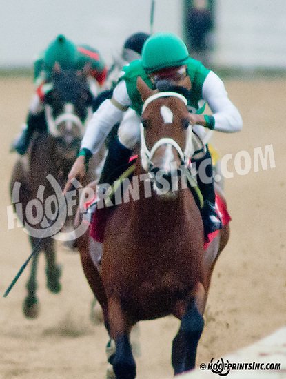 Lucky Sand winning at Delaware Park on 9/21/13