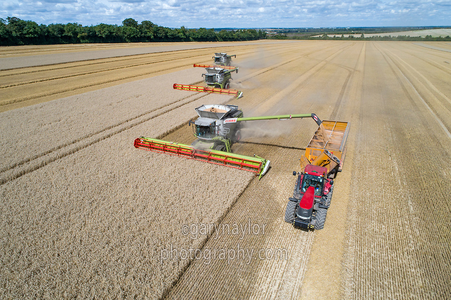 Claas Lexion 780 combine with 13.8m header loading chaser bins- Cambridgeshire, August