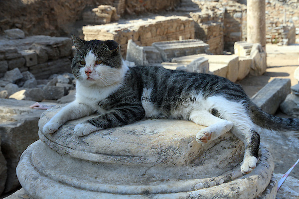 A striped cat lounges on the base of a column amoung the ruins of Ephesus Turkey.