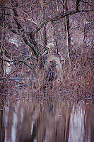 Duck Hunters in camoflauge at Sequoyah National Wildlife Refuge in Oklahoma