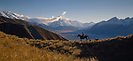 Farmer on horseback with dogs on Glentanner Station in the Mackenzie Country. Mount Cook in background. Canterbury. New Zealand.