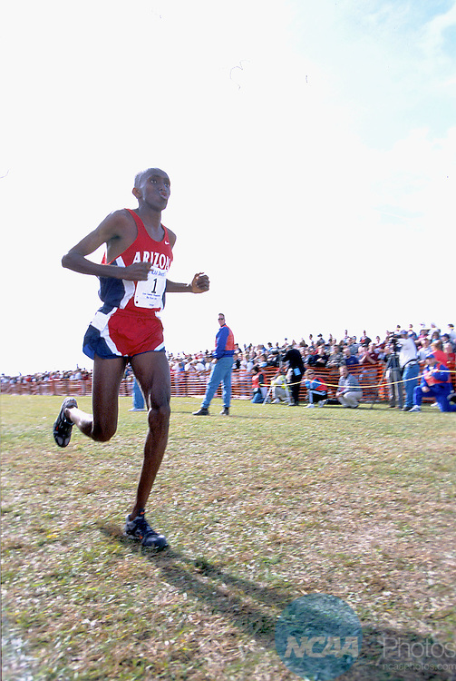 23 NOV 1998: Abdi Abdirahman of Arizona makes his way to the finish line of the Men's Division I Cross Country Championship held at Rim Rock Farm in Lawrence, KS. Abdirahman placed second in the event with a time of 29:49.90. Jeff Jacobsen/NCAA Photos