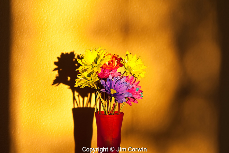 Sunset with daisies in a vase on shelf