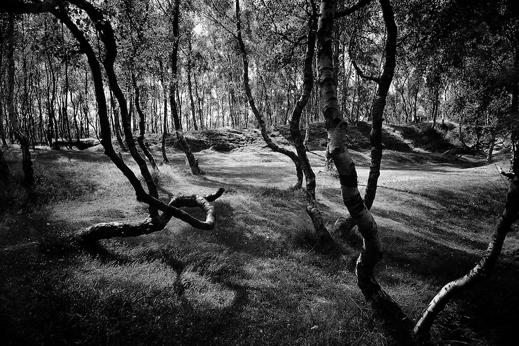 Sunlight and shadows in Silver Birch Forest, Bolehill Quarry, Peak Distruct