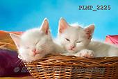 Marek, ANIMALS, REALISTISCHE TIERE, ANIMALES REALISTICOS, cats, photos+++++,PLMP2225,#a#