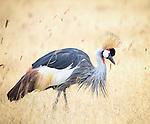 Birds* - Cranes, Bustards, Secretary Bird and Flamingo