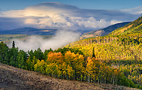 The image was made as the clouds and mist cleared, and light kissed the top of the trees. Uinta Mountains, Utah