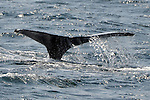 010 Whale Watch