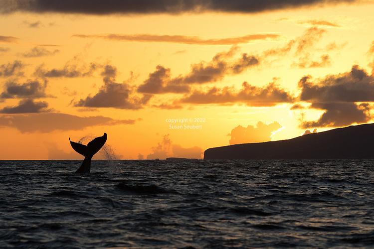 Lahaina, Maui, Whale Watch Trip, Hawaii, USA