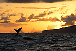 Lahaina, Maui, Whale Watch Trip, Hawaii, USA