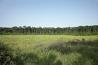 FOREST_LOCATION_90139