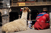 Cusco, Peru. Quechua Indian woman in traditional dress with her llama from the back in the Plaza de Armas.