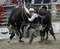 "29 Aug 2004: PRCA Rodeo Bull Rider Matt Austin riding ""Border Patrol"" tries to get his hand free during the PRCA 2004 Extreme Bulls competition in Bremerton, WA."