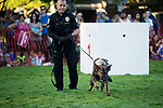 Beaverton City Police Department Officer Jared Lutu follows K9 Officer Toa, to the bad guy during National Night Out at Beaverton City Park.<br /> Photo by Jaime Valdez