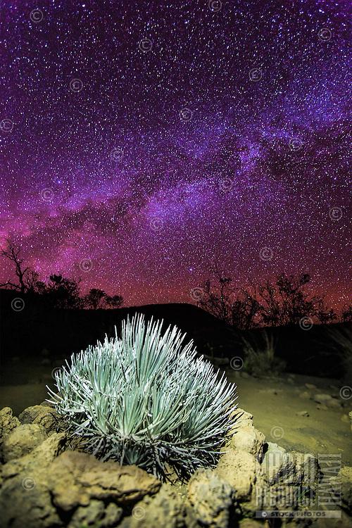The Milky Way galaxy fills the night sky over a silversword plant on Mauna Kea, Big Island of Hawai'i.