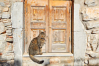 A cat outside traditional house in the medieval village of Mesta on the island of Chios, Greece